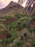 Barranca in Tenerife Royalty Free Stock Images
