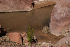 Barranco Barranco-bermellón del río del desierto-Paria de los acantilados de AZ-UT-Paria Fotos de archivo