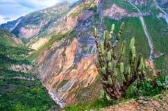 Barranco Colca, Perú Foto de archivo libre de regalías