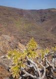 Barranco de Guayadeque Ravine, mamie Canaria Image stock