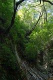 Barranco de piedra en la selva tropical imagenes de archivo
