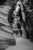 Barranco del antílope en B&W Imágenes de archivo libres de regalías