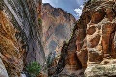 Barranco en parque nacional de zion Fotos de archivo libres de regalías