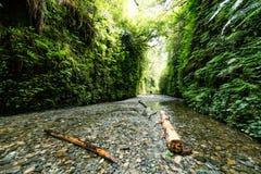 Barranco escénico del helecho con cala y árboles caidos Foto de archivo libre de regalías