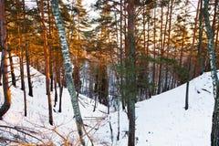 Barranco Nevado en bosque del invierno Imagen de archivo libre de regalías