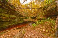 Barranco ocultado en el bosque de la caída fotos de archivo