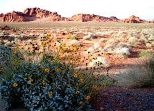 Barranco rojo Las Vegas de la roca imagenes de archivo