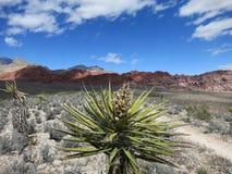Barranco rojo Las Vegas Nevada de la roca del rastro del desierto Imagen de archivo