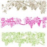 Barras creativas da uva Imagem de Stock