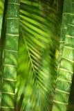 Barras de bambú Imágenes de archivo libres de regalías