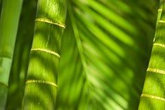 Barras y hojas de bambú Fotografía de archivo