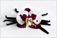 Barras y orquídea de la vainilla Imagen de archivo libre de regalías
