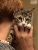 Barrato con il gattino bianco dello shorthair in mani Fotografia Stock