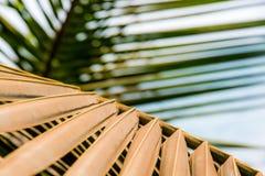 Barrato di foglia di palma fotografia stock libera da diritti