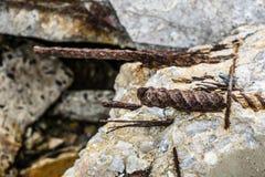 Barre d'acciaio della ruggine che sporgono dal calcestruzzo rotto Immagini Stock