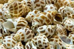 Barre des mollusques et crustacés photo libre de droits