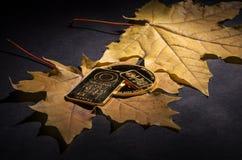 Barre e moneta di oro Minted su un fondo dell'foglie di acero gialle fotografie stock libere da diritti