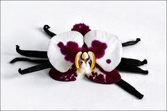Barre ed orchidea della vaniglia Immagine Stock Libera da Diritti