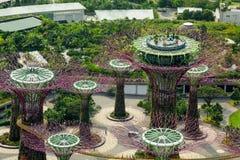 Barre exotique sur le dessus du supertree à Singapour Photos libres de droits
