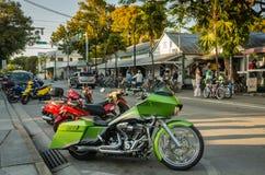 Barre verte de perroquet - Key West, la Floride images libres de droits