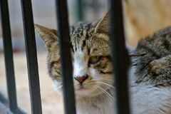 Barred cat. A cat behind bars Stock Image