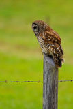 Barred Owl 2. Large barred Owl on fence post royalty free stock photography