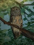 Barred Owl Strix Varia, Hoot Owl Bird. The barred owl, also known as northern barred owl or hoot owl, is a true owl native to eastern North America royalty free stock image