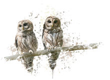 Barred Owls Watercolor Royalty Free Stock Photo