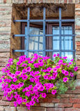 Barred window with a large flower bed of lilac flowers. Element of European house royalty free stock photography