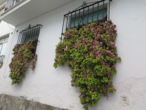 Barred windows with large trailing plant Stock Images