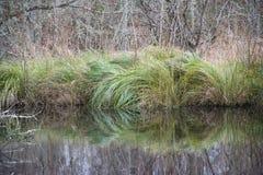Barreira da grama verde Fotografia de Stock Royalty Free
