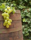 Barrel. Wine barrel and grape vine Stock Image