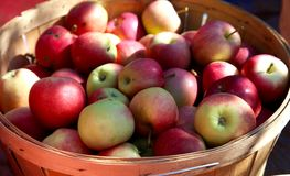 Barrel of apples. A wooden barrel of apples for sale at a market royalty free stock images