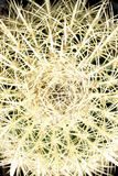 Barrel Cactus Close Up. For texture and detail. Desert landscape staple royalty free stock photography