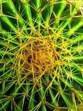 Barrel Cactus. A closeup of a barrel cactus stock images