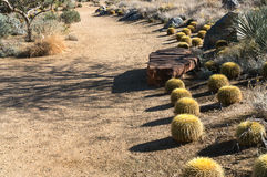 Barrel Cactus line a pathway Royalty Free Stock Image