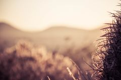 Barrel Cactus Needles with blurred landscape royalty free stock photography