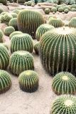 Barrel cactus pattern Royalty Free Stock Images