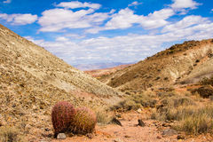 Barrel Cactus. On the side of a trail in The Valley of Fire State Park outside of Las Vegas Nevada Stock Photography