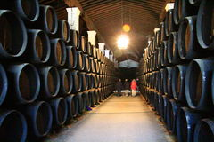 Barrel cellar in the Gonzales-Byass winery Royalty Free Stock Photography