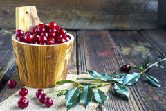 Barrel with cherries Stock Photography