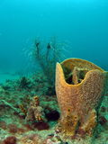 Barrel Coral Royalty Free Stock Images