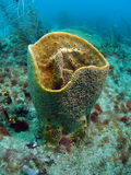 Barrel Coral Royalty Free Stock Photography