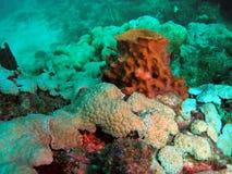 Barrel Coral. In Pompano beach, Florida Royalty Free Stock Image