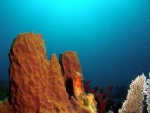 Barrel Coral Stock Image