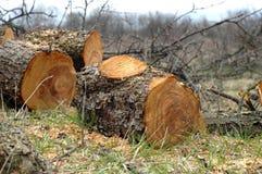 Barrel of fruit-tree Stock Photo