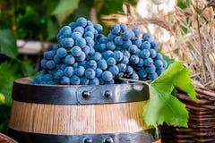Barrel full of dark grapes Royalty Free Stock Image