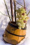 Barrel and grapes Royalty Free Stock Images