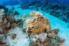 Barrel of oil underwater Stock Photos