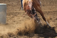 A barrel racing horse. A close up action photography image of a barrel racing horse kicking up dirt Royalty Free Stock Images